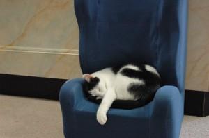 Our office cat Spyda