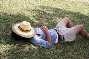 1037355 a sunny day nap